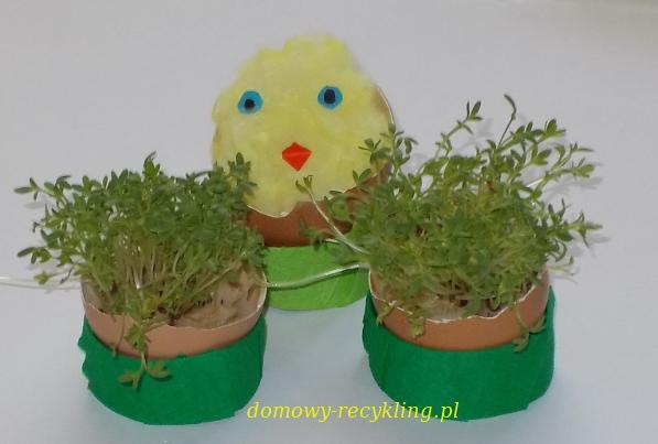 Kurczaczek wykluwający się z jajka i rzeżucha w skorupkach - ozdoby wielkanocne
